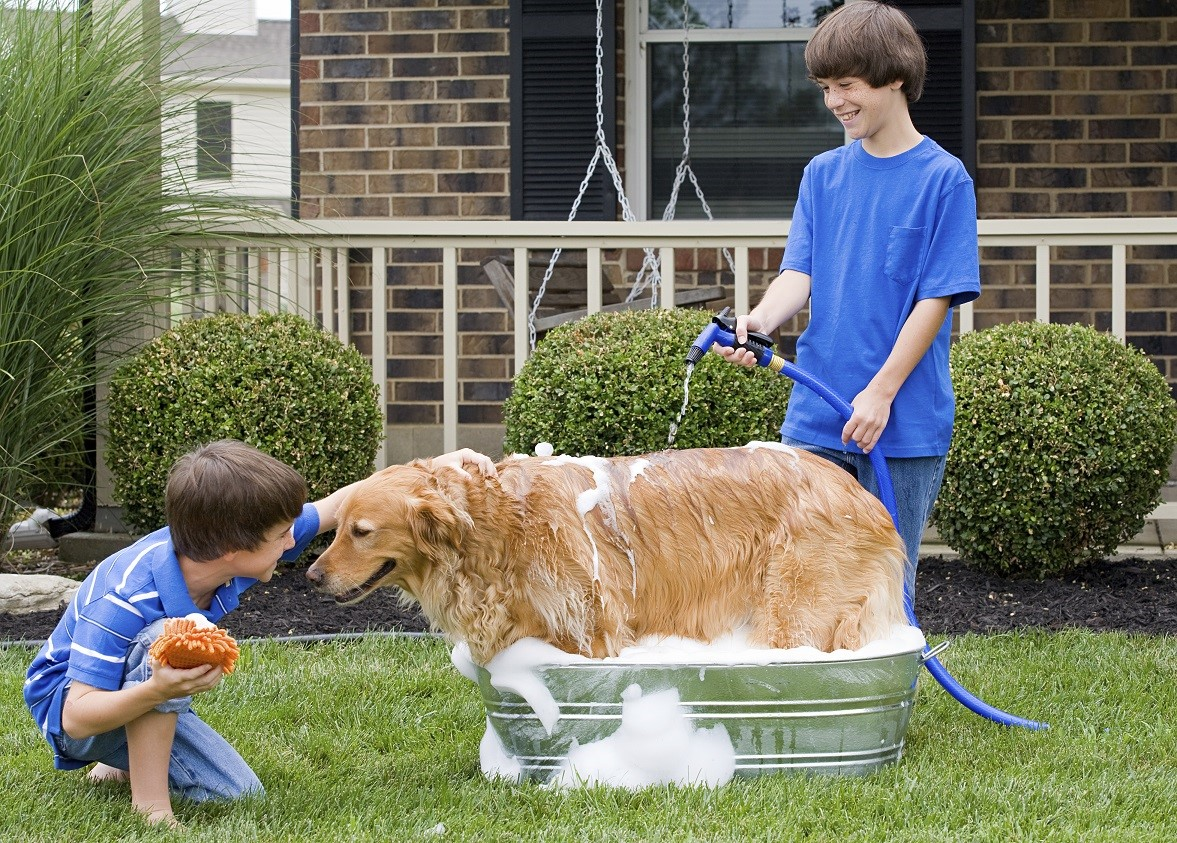 top plumbing tips for pet parents