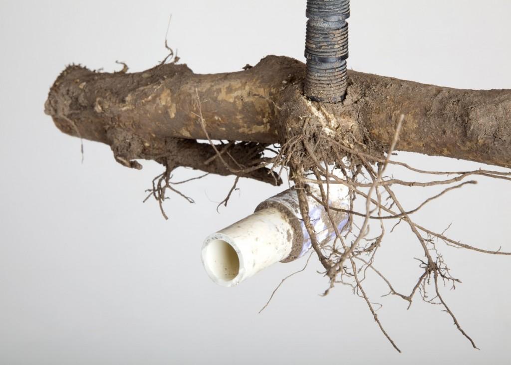 Roots break PVC pipe.