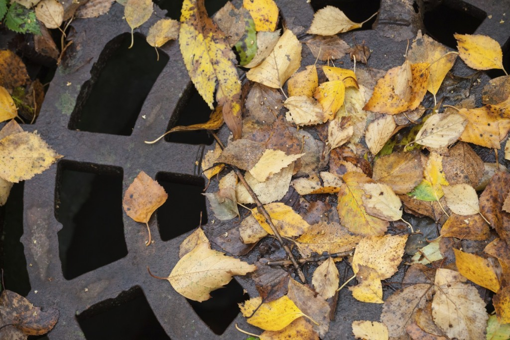 Drainage sewer manhole in the autumnal park